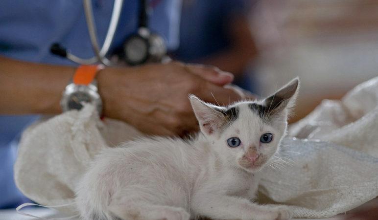 Get started as a veterinary nurse